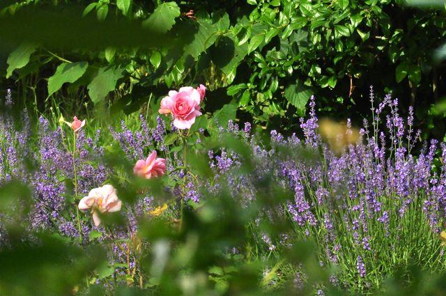 fleurs du jardin du voisin