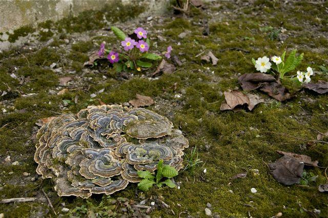 champignon parasite
