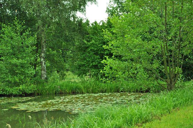 nénuphar rose sur un étang en Allemagne