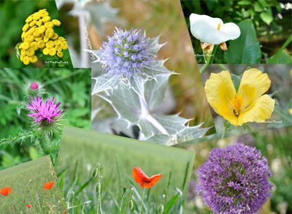 fleurs divers en vrac