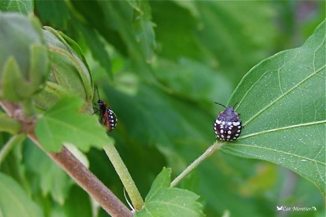 punaises en ligne nature insecte
