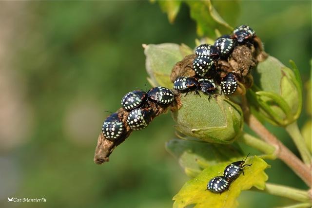 insectes en photo ou macro dans la nature. Black Bedroom Furniture Sets. Home Design Ideas