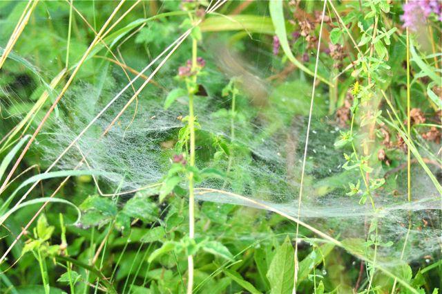 araignées et toiles